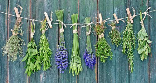gwen-herbs.jpg
