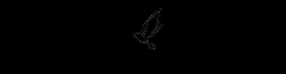 Dove_divider_.png