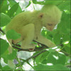 rajiya-monkey.jpg